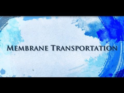 Membrane Transport....Plasmamembrane
