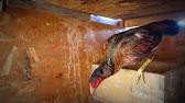Las wafulas (lacy over cripple tony hens) - YouTube