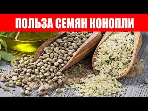 Семя конопли для лечения печени выращивание марихуаны эсл