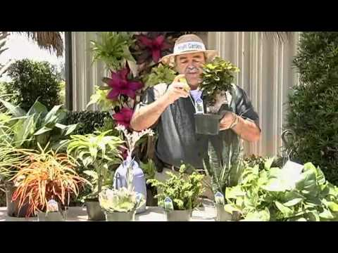 General Plant Care Instructions.avi