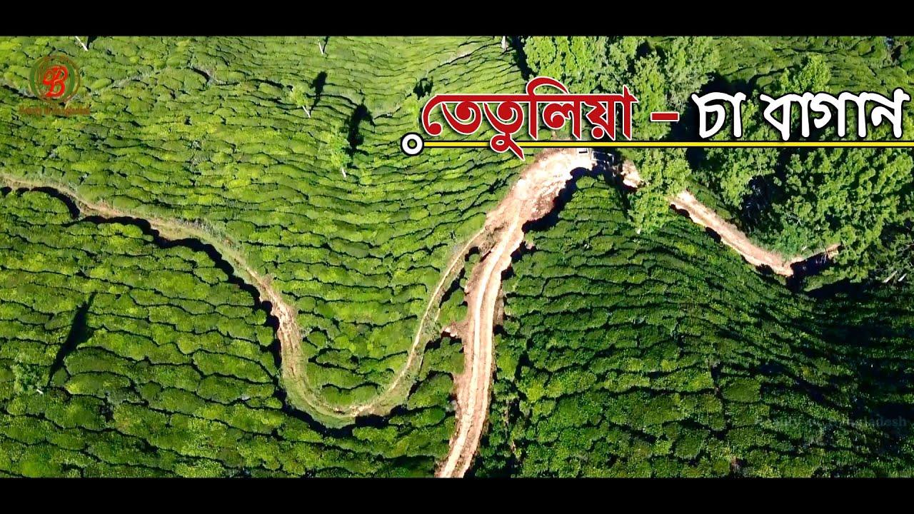 তেতুলিয়া চা বাগান পঞ্চগড় I Tetulia Tea Garden Panchagarh.......