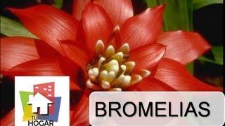 Entrevista sobre Las Bromelias Parte 1- Programa Tu Hogar Ideal