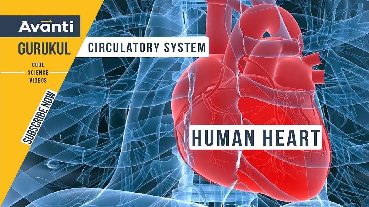 Class 10 Science Heart Diagram ~ DIAGRAM