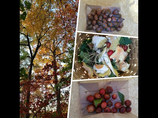 Autumn Foraging Challenge Part I - Wild Edible Collection