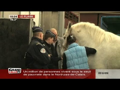 6 nouveaux chevaux pour la police nationale youtube for Police nationale lille