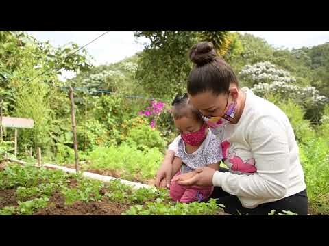 Programa de Huertas Urbanas en Manizales