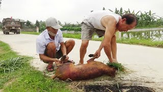 Thịt Chó Bắc Kİnh 27kg - Ăn mừng a๐ Cá và mขa Siêu Xe