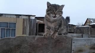 Котенок Барс, Гуляем в городе с щенком :)