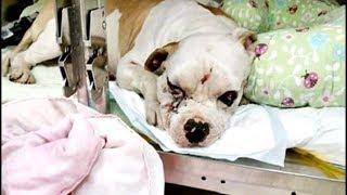 Узнав о том, что собака изуродована, хозяева жестоко предали питомца