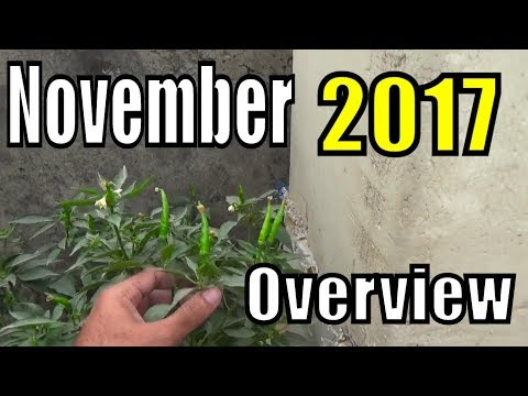 Kitchen Gardening [OVERVIEW] - November, 2017 | New Plants + vegetables (urdu/hindi)