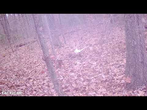 Deer Hunting With Dogs Doe Miss And Big Buck KILL SHOT.
