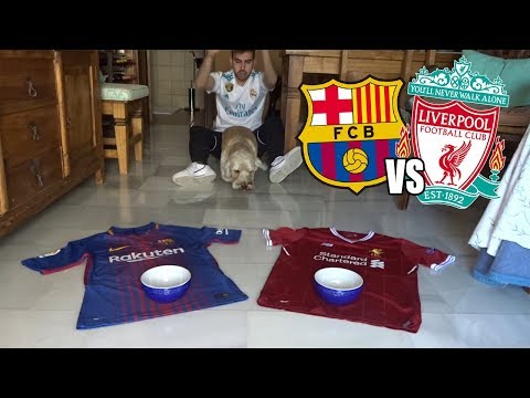 MI PERRO PREDICE EL GANADOR DEL FC BARCELONA VS LIVERPOOL SEMIFINAL CHAMPIONS LEAGUE 2019
