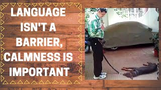 Language isn't a barrier in dog training...
