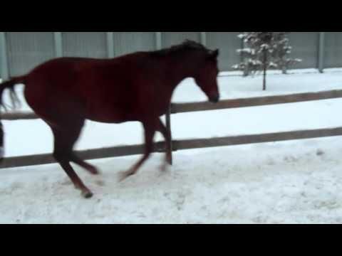 Игры конное состязание horse eventing 3