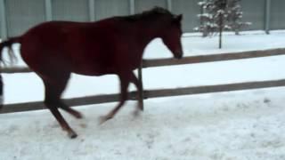 Сеня балуется. Видео про лошадей. Игры с лошадьми.(Счастливая лошадь, играется., 2015-12-23T20:06:04.000Z)
