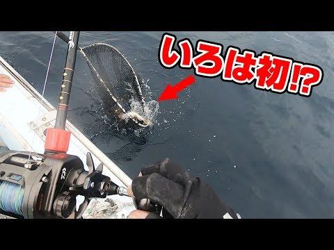 五島沖ヒラマサキャスティング&鯛ラバ後半戦‼