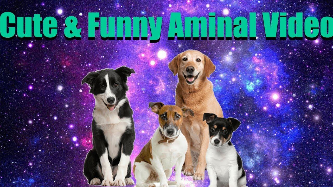 Funny Animals 🐶🐶Funniest & Cutest Animals Videos ❤️😂❤️ Cute & Funny Animals🐱🐶🐶