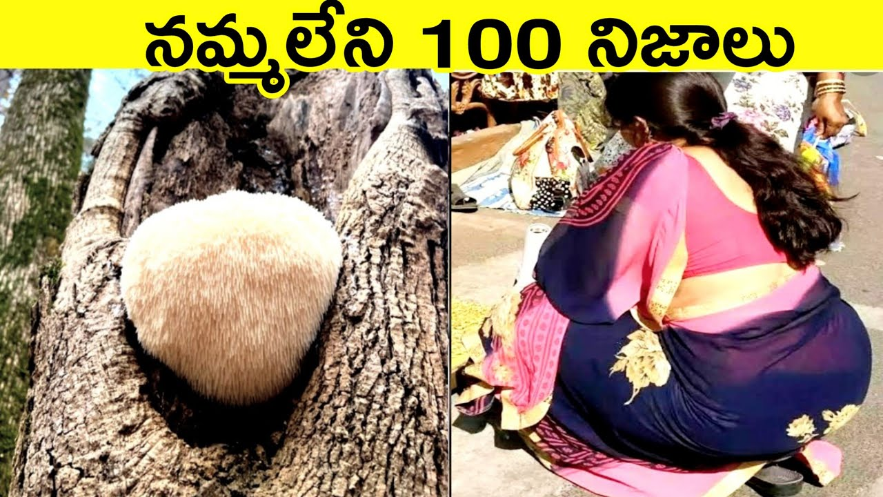 🔝Top 100 Interesting And Unknown Facts Telugu|Amazing Facts|Telugu Facts|CTC Facts
