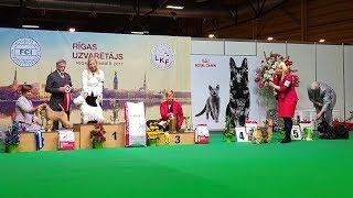 ЛУЧШИЕ ТЕРЬЕРЫ выставки собак Победитель Риги ♦  BEST IN GROUP 3 - ZooExpo 2017 FCI CACIB Dog Show