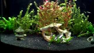 46 Gallon Bowfront Aquarium 12/14/2013