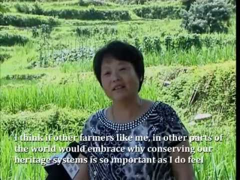 China: Rice-fish culture, generating ecological, economic and social benefits