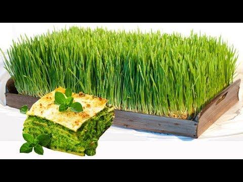 Как правильно прорастить зерно пшеницы для еды в домашних условиях с удобрением? Польза ростков.