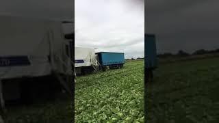 видео Голландские семена редьки зимней оптом