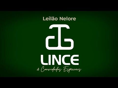 Lote 96   Neon Terra Verde   BEND 2192 Copy