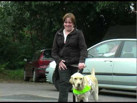 Guide Dogs event.mov
