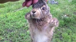 Дети поймали зайца на стройке нашего дома