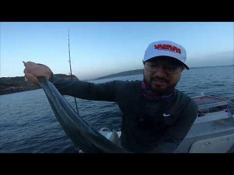 RAPTOR CHARTERS - KINGFISH FISHING! (AUSTRALIAN CHARTER)