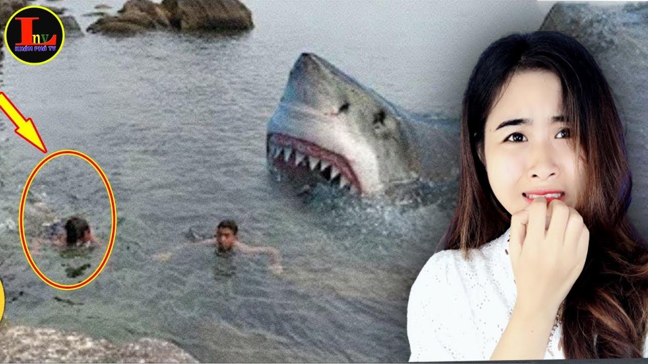 Cận Cảnh Camera Quay Lại 10 Con Cá Mập Hung Dữ Nguy Hiểm Nhất Hành Tinh