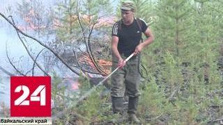 Жара и полчища насекомых: в Сибири идет борьба с лесными пожарами