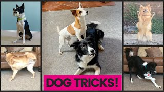 AMAZING DOG TRICK COMPILATION:50+ fun, cool dog trick ideas to teach your dog! Positive dog training