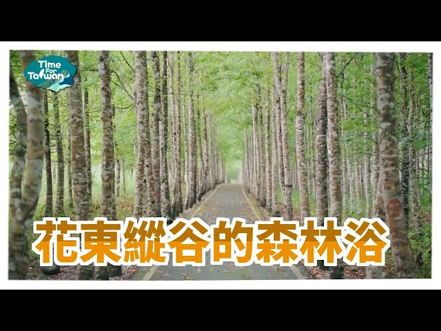 花東縱谷的森林浴|Time for Taiwan - Taiwan Tourist Shuttle-Hualien Route