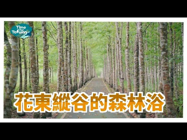花東縱谷的森林浴|Time for Taiwan - Taiwan Tourist Shuttle-Hualien Route