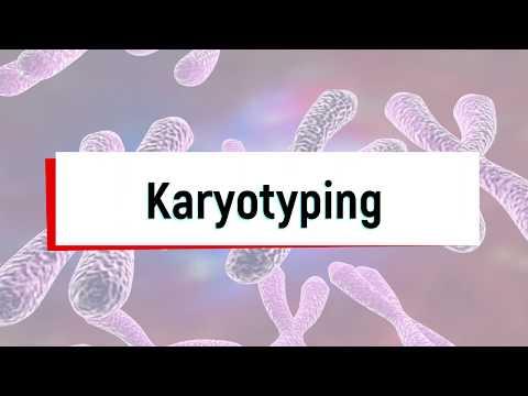 What Is Karyotyping Test Or Chromosomal Analysis?