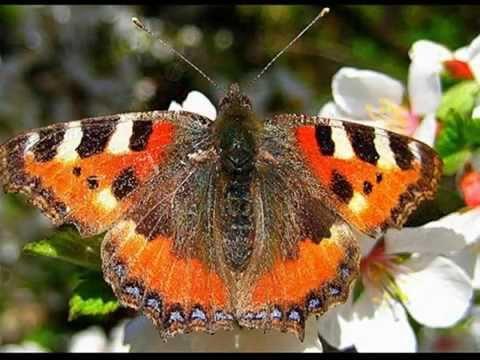 Названия бабочек для детей