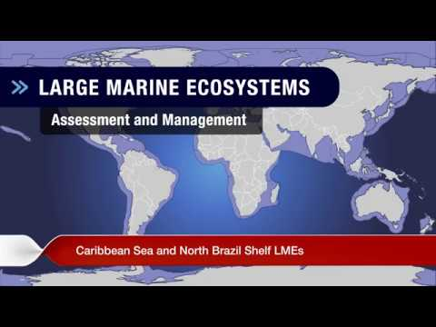 Week 6: Patrick Debels on the Caribbean and North Brazil Shelf LMEs (audio only)