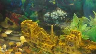 Черепаха Ривза и красноухая в аквариуме 600 литров!