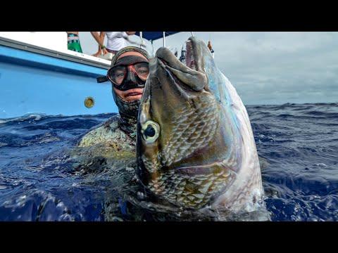 Tips For SPEARFISHING Green Job Fish (Uku), Longnose Emperor + DOGTOOTH TUNA In Tonga