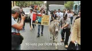 #1 Yo voto por Don Burro en todas las dignidades de elección popular, 2013.03.16.