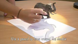 Chester Zoo - How To Create Animal Shadow Art