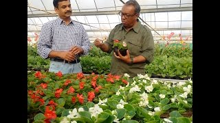 Flower farm in Qatar