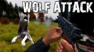 WOLF ATTACK! - DayZ Standalone EP1