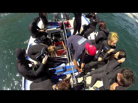 Gap Year South Africa - Ultimate Marine Adventure with Animal Ocean.mov