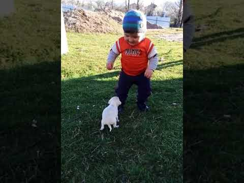 CUTE PUPPY Meeting FUNNY BABY for the first time - Cute moments