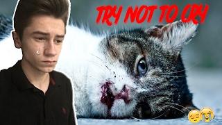 Download Уродливый кот   TRY NOT TO CRY CHALLENGE   ПОПРОБУЙ НЕ ЗАПЛАКАТЬ ЧЕЛЛЕНДЖ Mp3 and Videos