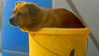 My Dog is Definitely Broken | Funny Pet Videos