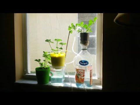 Cheap DIY Windowsill Hydroponics Drip Watering System